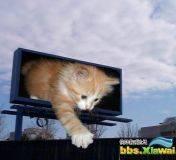 地球上无敌猫咪超萌图片秀